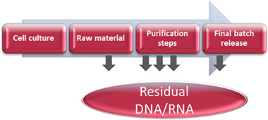Residual DNA from production processes