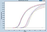 qPCR analysis using MGB probes